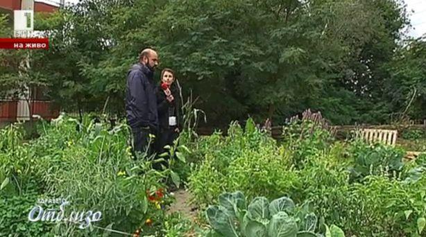 Първата обществена биоградинка в София