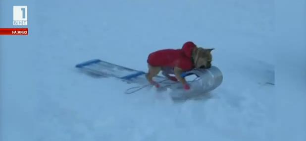 Домашни любимци в снега