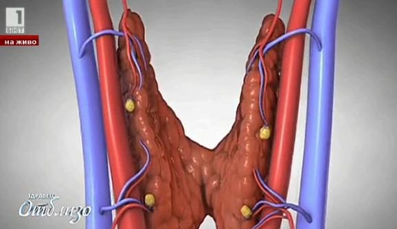 Природна аптека: Рецепта от Петър Дънов за спряване с проблеми с щитовидната жлеза