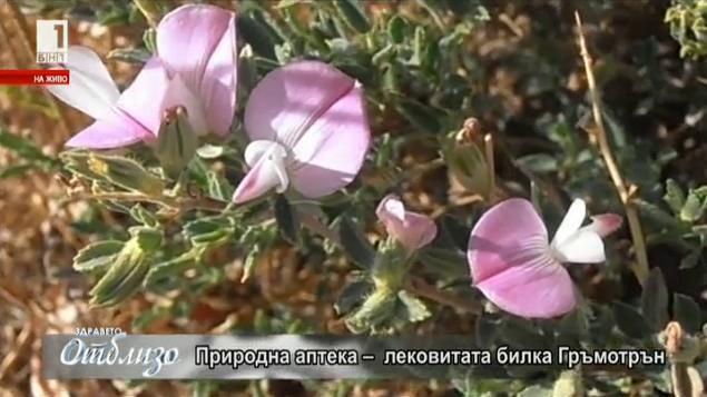 Природна аптека: Гръмотрън за отслабване