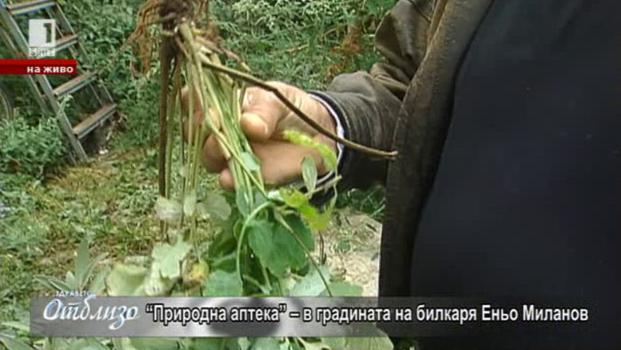 Природна аптека – рецепти за имунитет на билкаря Еньо Миланов