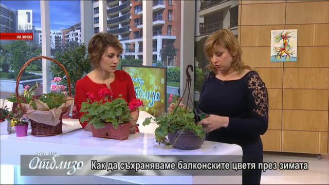 Как да съхраняваме балконските цветя през зимата