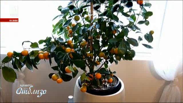 Лечебни растения у дома