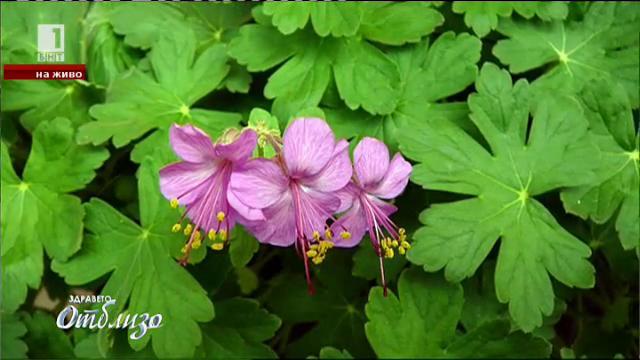 Кои растения пречистват въздуха най-добре