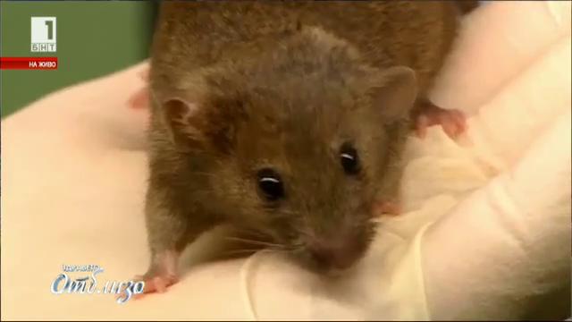 Мишкин ден – съдбата на лабораторната мишка