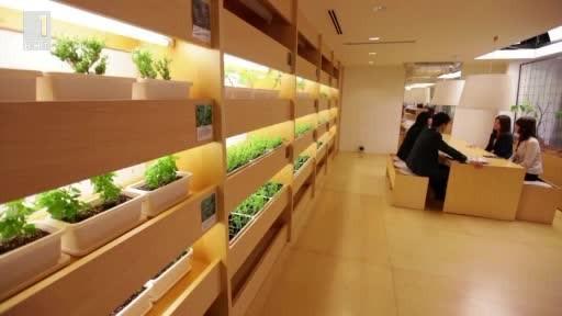 Зеленчуци направо от бюрото