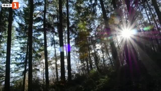 Говорещият с дърветата