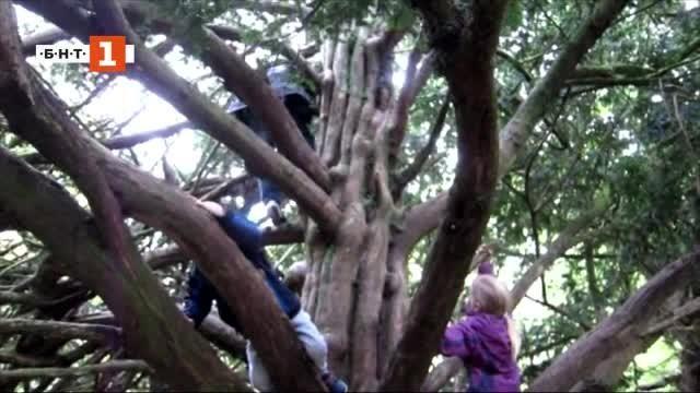 Катеренето по дървета - идеалната тренировка