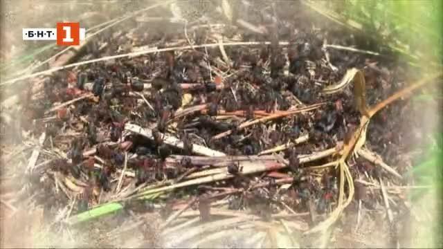 Да се поучим от мравките