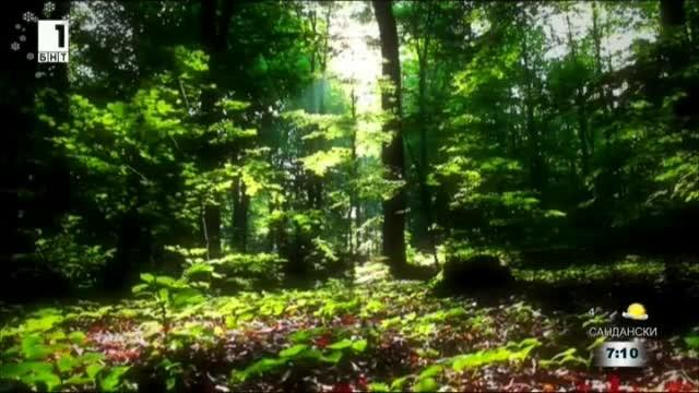 Разходката в гората - успешната терапия срещу стреса