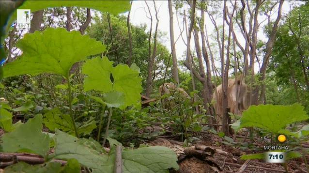 Кози, които спасяват Бруклинската гора