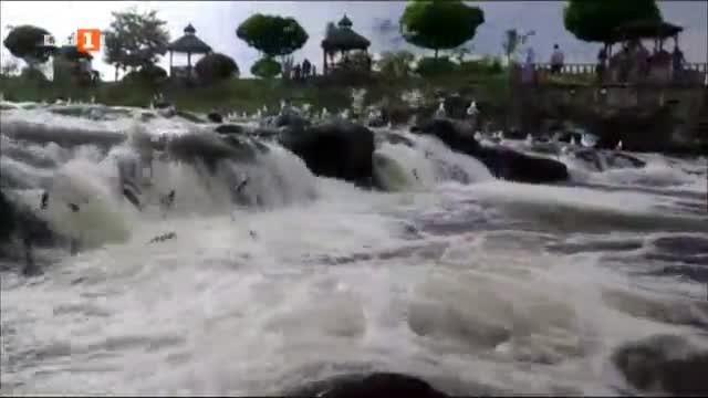 Лъчеперките от езерото Ван