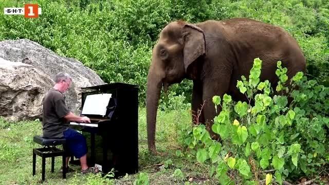 Слоновете на Пол Бартън