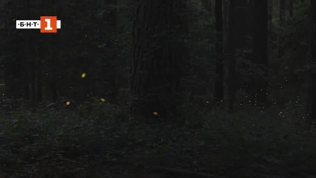 Танцът на светулките