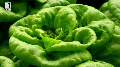 Нов модел за отглеждане на зеленчуци
