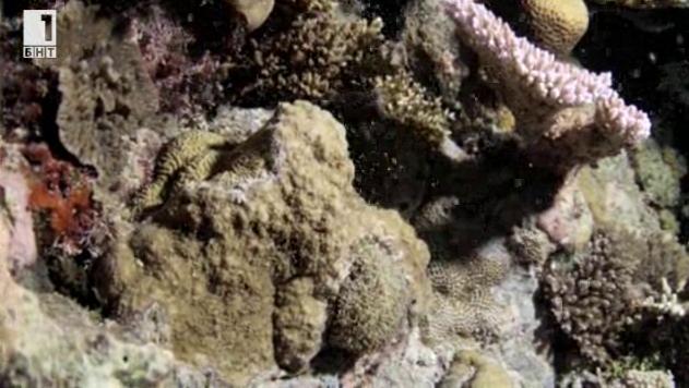 Зелена светлина - 4 декември 2013: Коралов екстаз