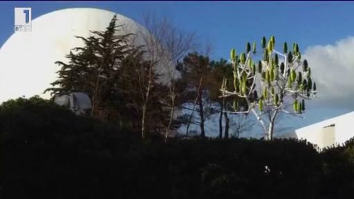 Щом листата уловят енергията от вятъра... в Зелена светлина - 5.01.2015