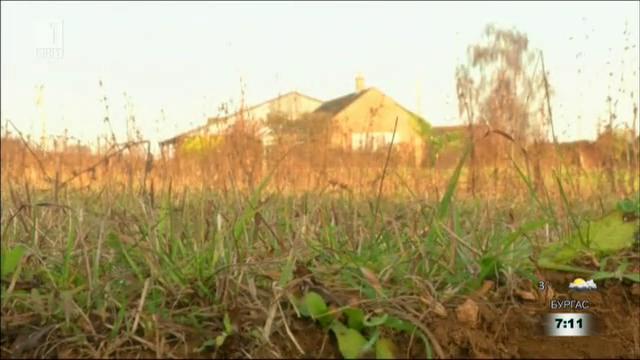 Трева, която лекува почвата