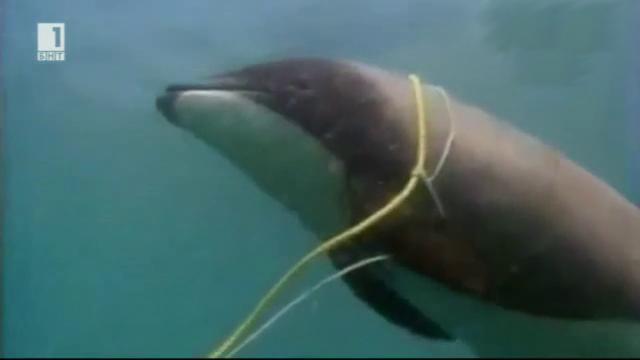 Зелена светлина - 8 октомври 2014: Морските хобити изчезват