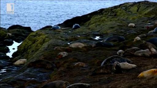 Зелена светлина - 10 декември 2013: Островите Фарн