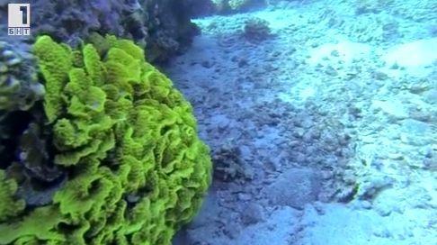 Зелена светлина - 13 октомври: Изкуствен корал спасява рифовете