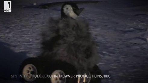 Зелена светлина - 14 ноември 2014: Пингвин-шпионин