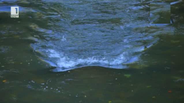 Зелена светлина - 15 октомври 2014: На слънце и вода
