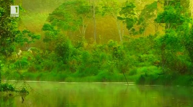 Какво крият дърветата? В Зелена светлина - 16.01.2015