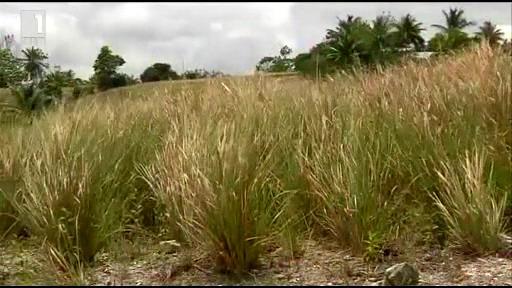 Зелена светлина - 16 май 2014: Ароматът на Хаити