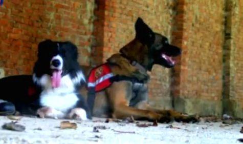 Четириноги спасители в Зелена светлина - 19.01.2015