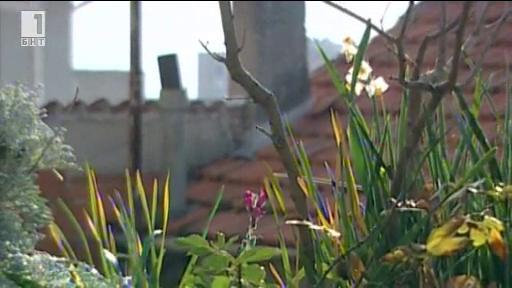 Зелена светлина - 23 януари 2014: Пролет през зимата
