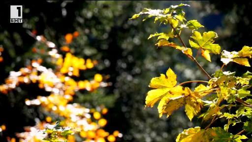 Зелена светлина - 23 октомври 2014: За есенните листа и възможностите, които валят от дърветата