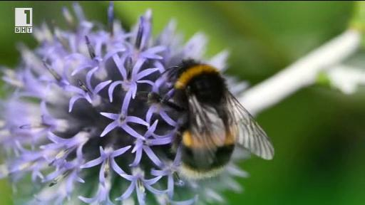 Магистрала за пчели