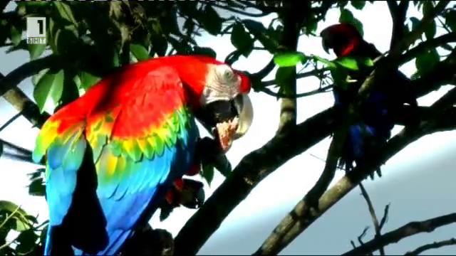 Папагали завладяват бетонната джунгла на Каракас