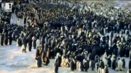 Зелена светлина - 30 декември 2013: Императорите на бялата пустиня