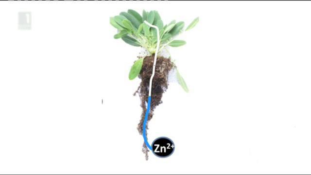 Растенията в помощ на природата след човешката дейност в Зелена светлина на фокус, 10.02.2015