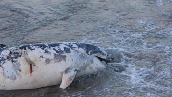 Зелена светлина на фокус - 28 януари 2014: Избиването на делфини