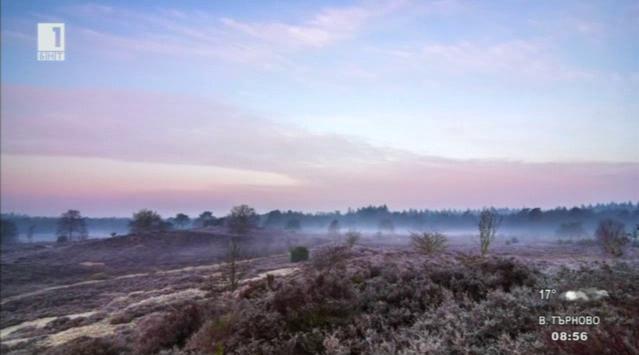 Минути за ускорено съзерцание на холандската природа