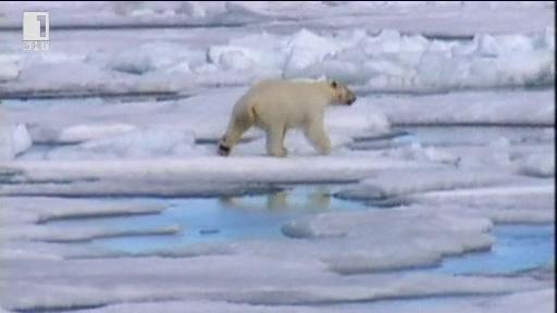 Зелена светлина: Търси се съгледвач на мечки