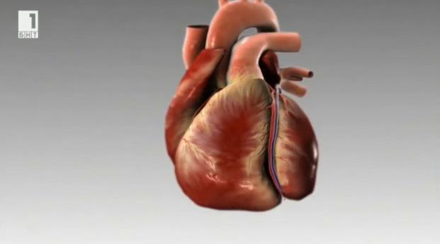 Всичко за здравото сърце