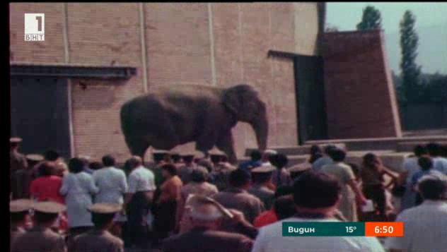 Истории от архива: 34 години Софийски зоопарк