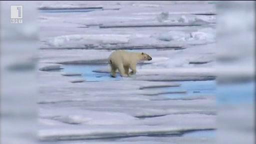 Зелена светлина - 10 юли 2014: Животът на една бяла мечка