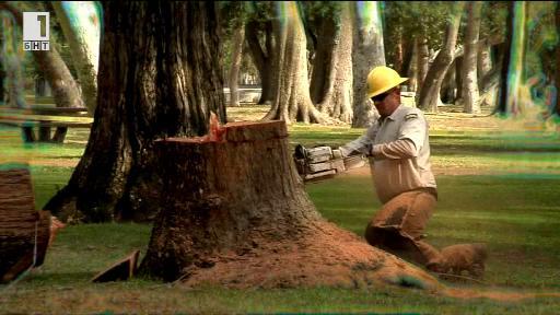 Умиращите дървета на Лос Анджелис